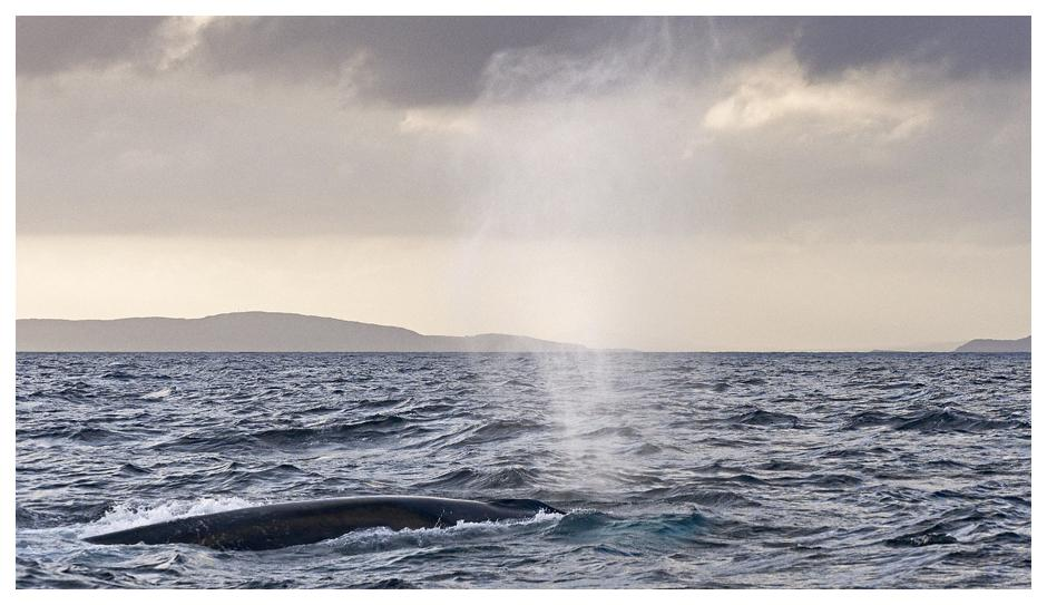 West Cork Photography Breaks whale watching